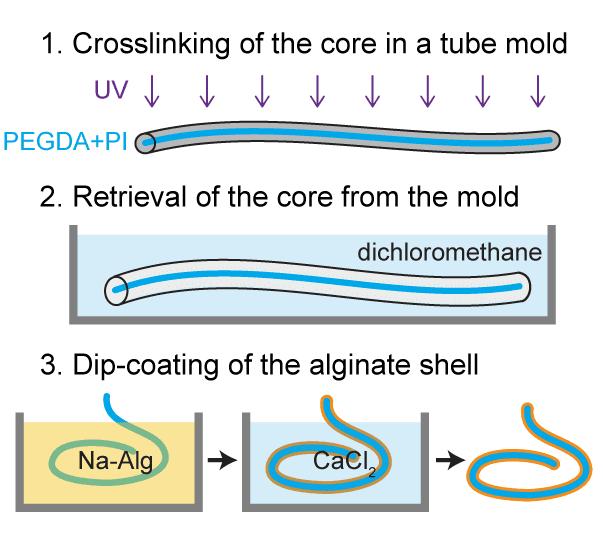 fabrication of a hydrogel optical fiber