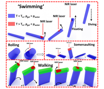 Bioinspired swimming and walking hydrogel mini-robots