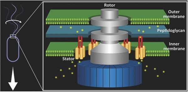 The Pinnacle of Evolutionary Bionanotechnology – The Bacterial Flagellar Motor