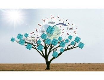 solar-tree-featured-image