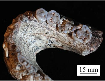 Using micromechanics to simulate the wear and tear of teeth