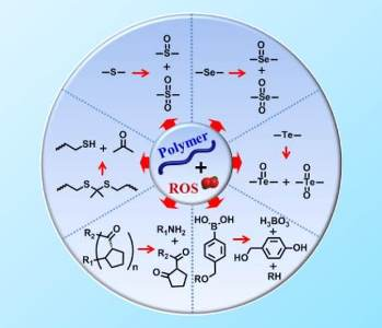 Reactive Oxygen Species (ROS) Responsive Polymers – A Review