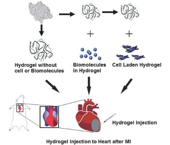 Injectable hydrogels for cardiac tissue repair