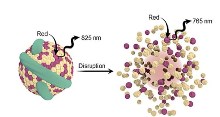 Ratiometric imaging of intact and disrupted nanocarriers