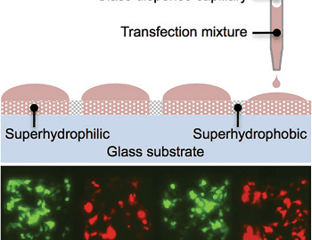 ultrahigh-density-cell-microarry