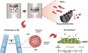 nanovesicles