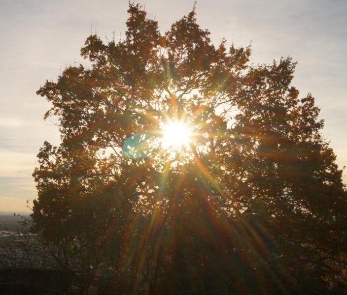 Vitamin D Deficiency – Genetics, Sunlight, or Diet?