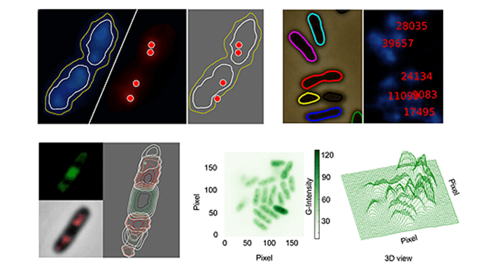 CellShape: imaging bacterial factories from the inside