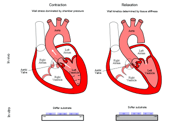 materials-for-cardiac-tissue-engineering