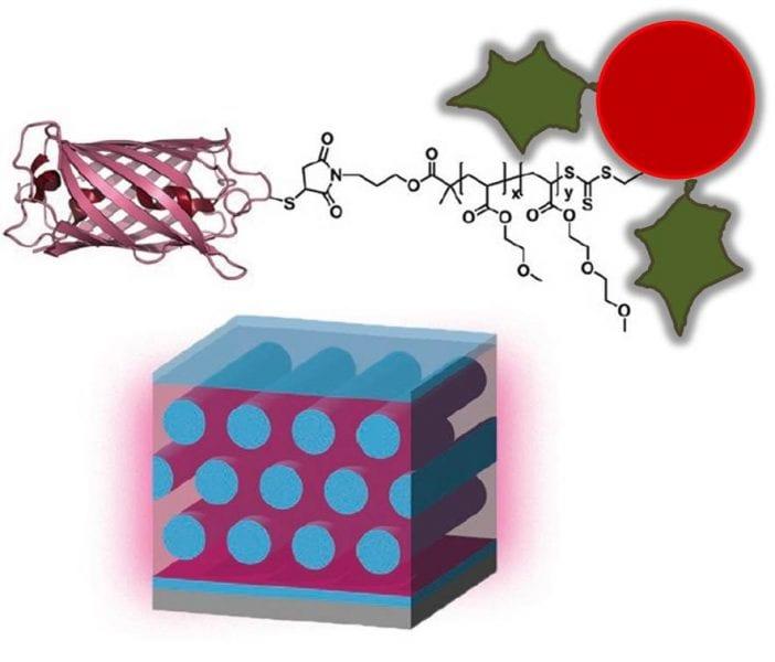 protein–polymer bioconjugates