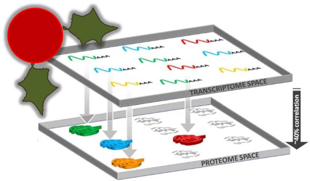proteome profiling