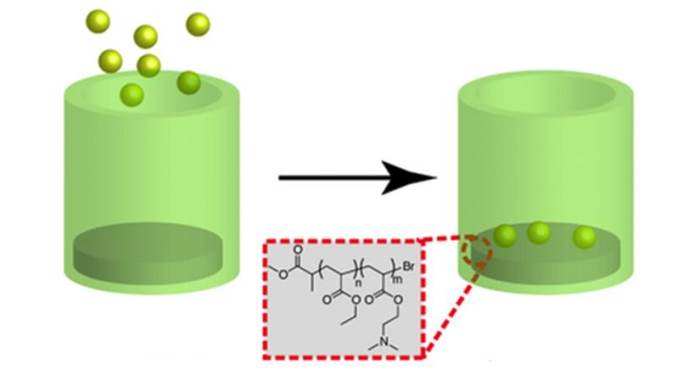 Understanding Polymer-Cell Attachment
