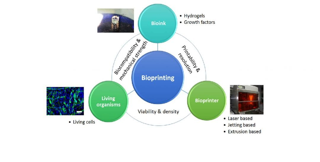 Printing Life – Bioprinting of Thermoresponsive Hydrogels