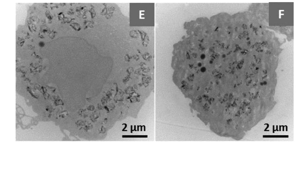 Are MoS2 Nanosheets Safe for Use in Humans?
