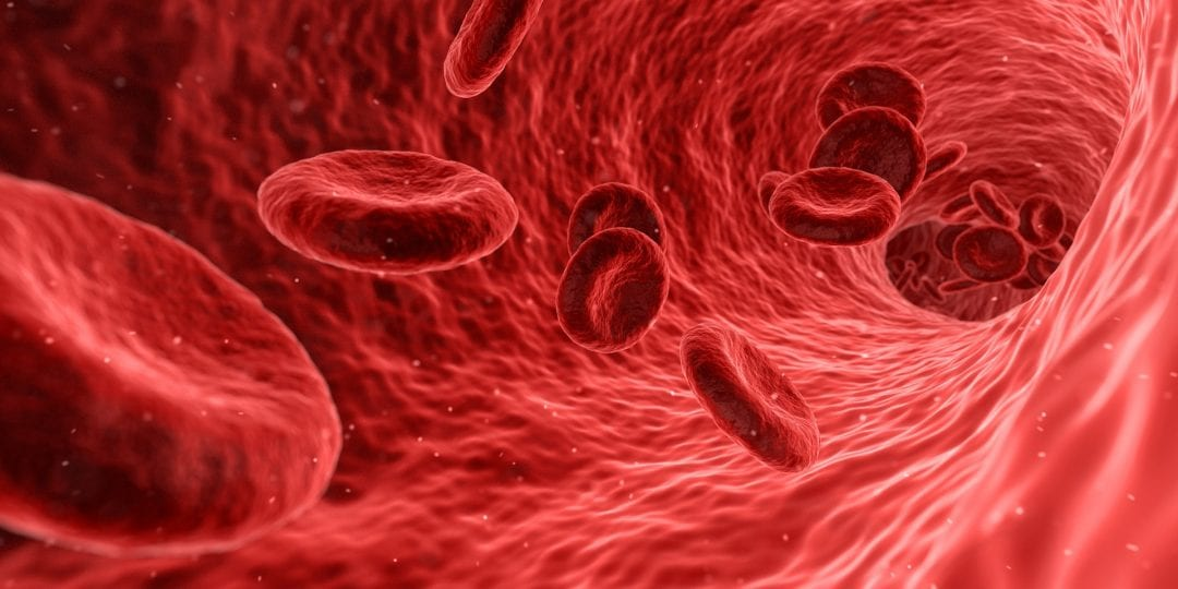 Blood-Detox with Red Blood Cell Microreactors