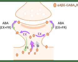 Upregulation of Extrasynaptic Inhibitory Receptors Protects against Anorexa nervosa