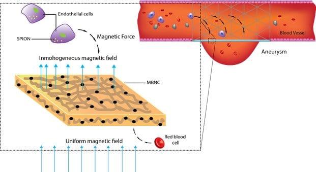 Magnetic Healing of Brain Injury