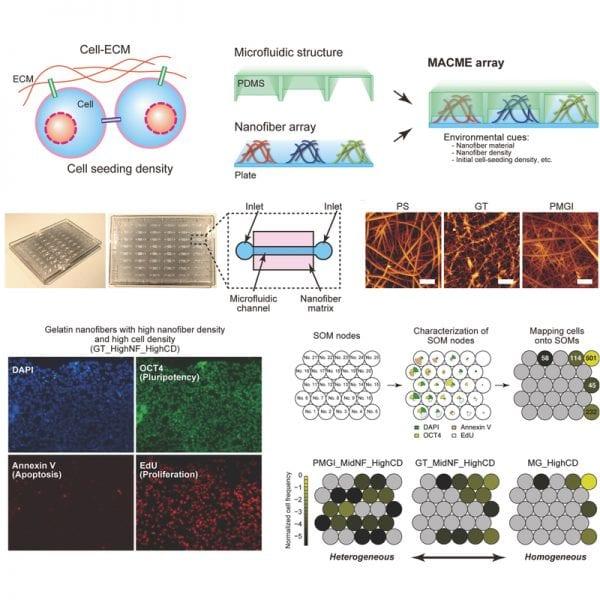 Artificial Cellular Microenvironments