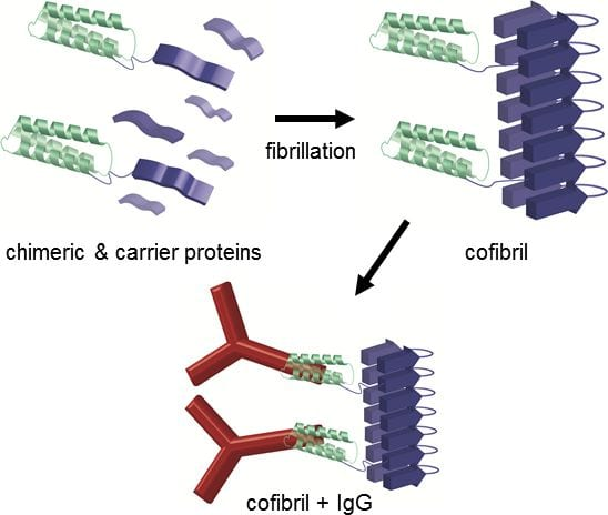 Catching Antibodies with Protein Nanofibrils