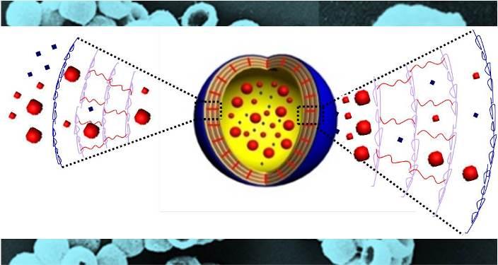 Mimic the Cell Membrane: Smart Capsules
