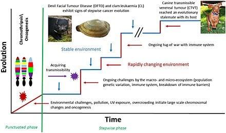 transmissible cancer evolution