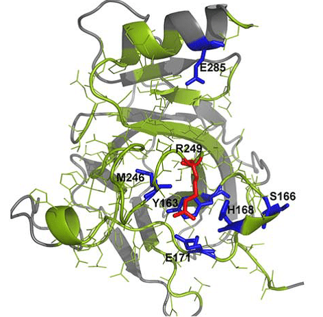 Mutantelec: A Simulation Platform for Profiling of Proteins
