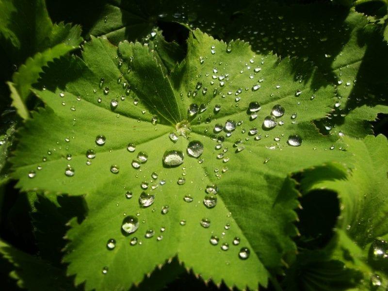 An Artificial Leaf for Solar Water-Splitting