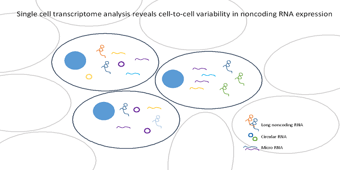 Single Cell Transcriptomics of Non-Coding RNAs and their Cell-Specificity