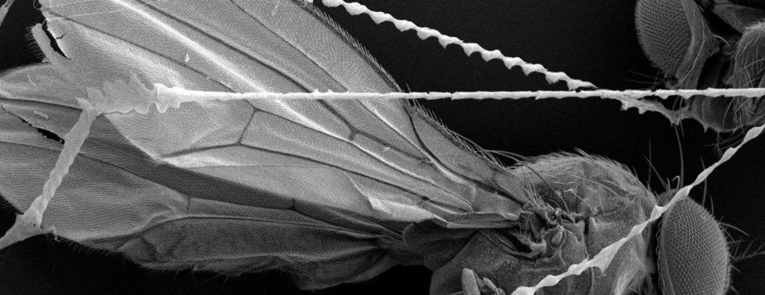 Nanofiber Spiderwebs