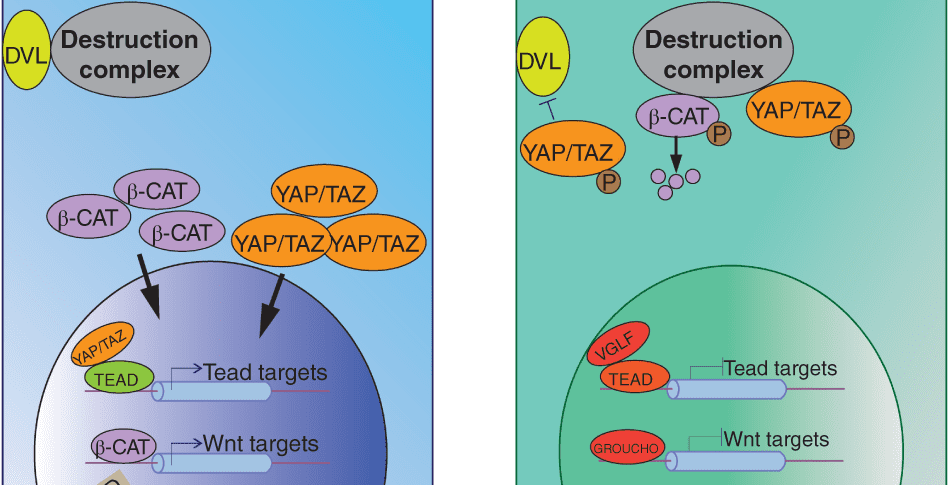 Signaling and Epigenetic Mechanisms of Intestinal Stem Cells and Progenitors