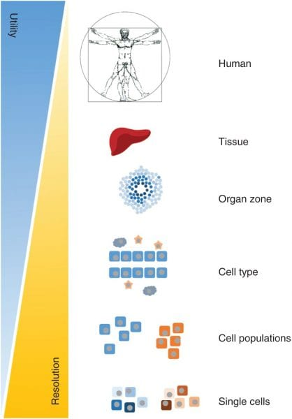 Using Genome-Scale Metabolic Models for Human Diseases