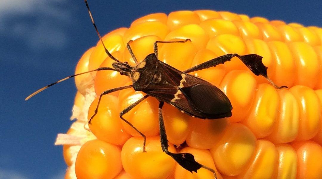 The Future of Pest Management