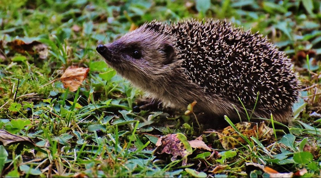 Copper Nanowire Hedgehogs: Nature-Inspired SERS Substrates