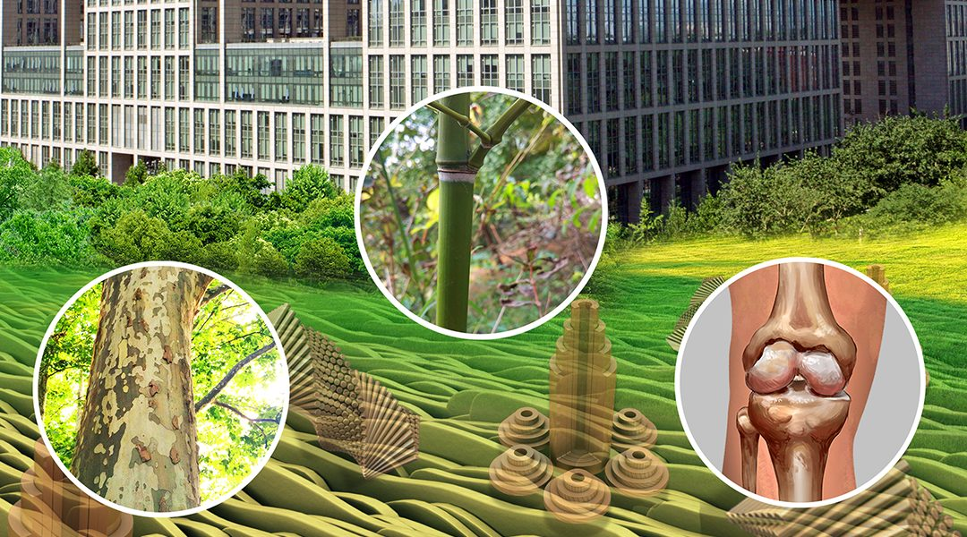 Nature-Inspired Surface and Materials Research at Beihang University