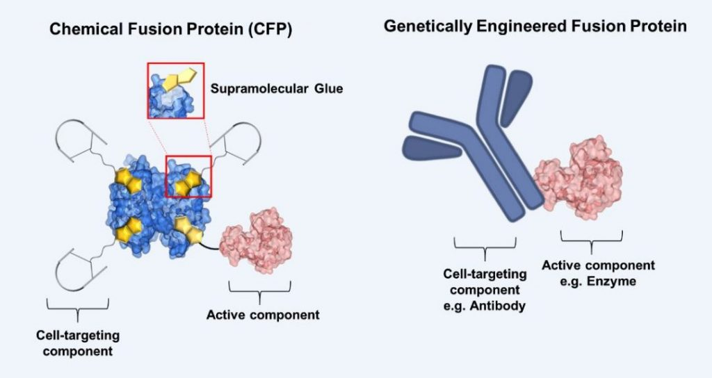 chemically engineered fusion proteins beyond nature s machinery