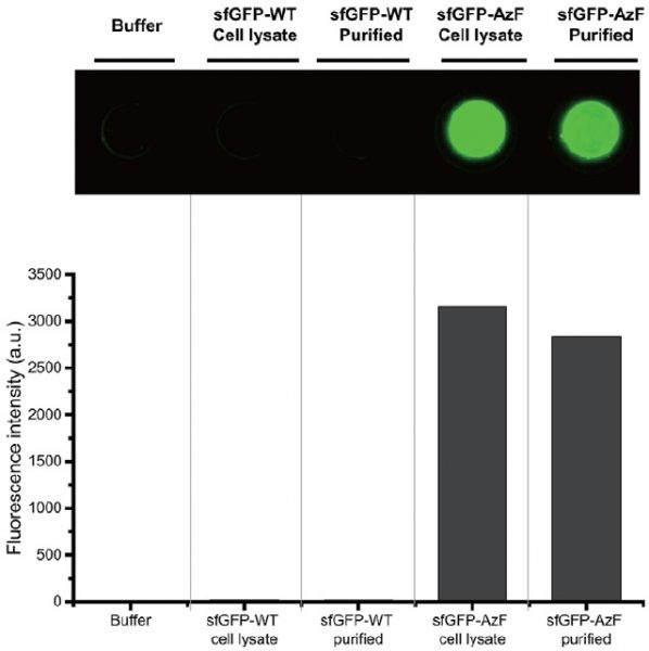selectivity of the new protein immobilisation process