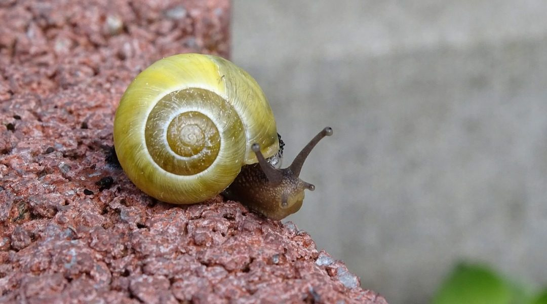 Snail-Scale Study Shrinks Landscape Genetics to Manageable Size