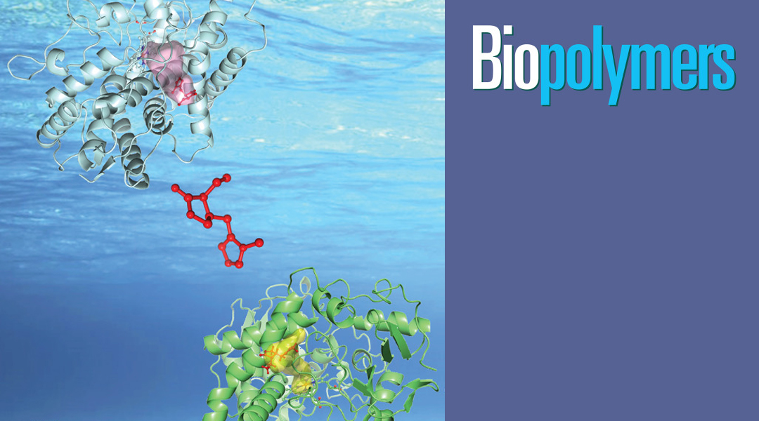 Call for Nominations: Biopolymers Murray Goodman Memorial Prize