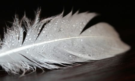 A wet feather