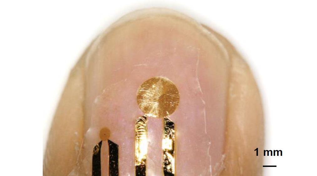 Wearable Fingernail Sensor Provides Hotbed of Thermal Data