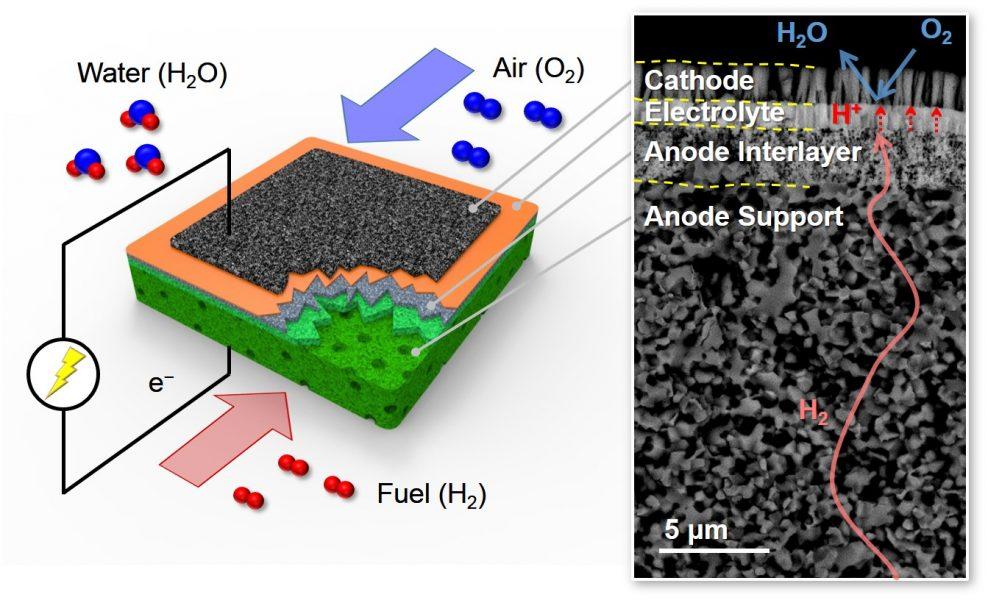 fuel cells SEM