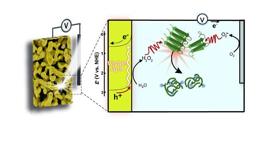 Light-Triggered Dissociation of Alzheimer's β-Amyloid Aggregates