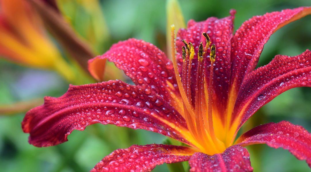 Multi-Responsive Actuators Blooming at Night