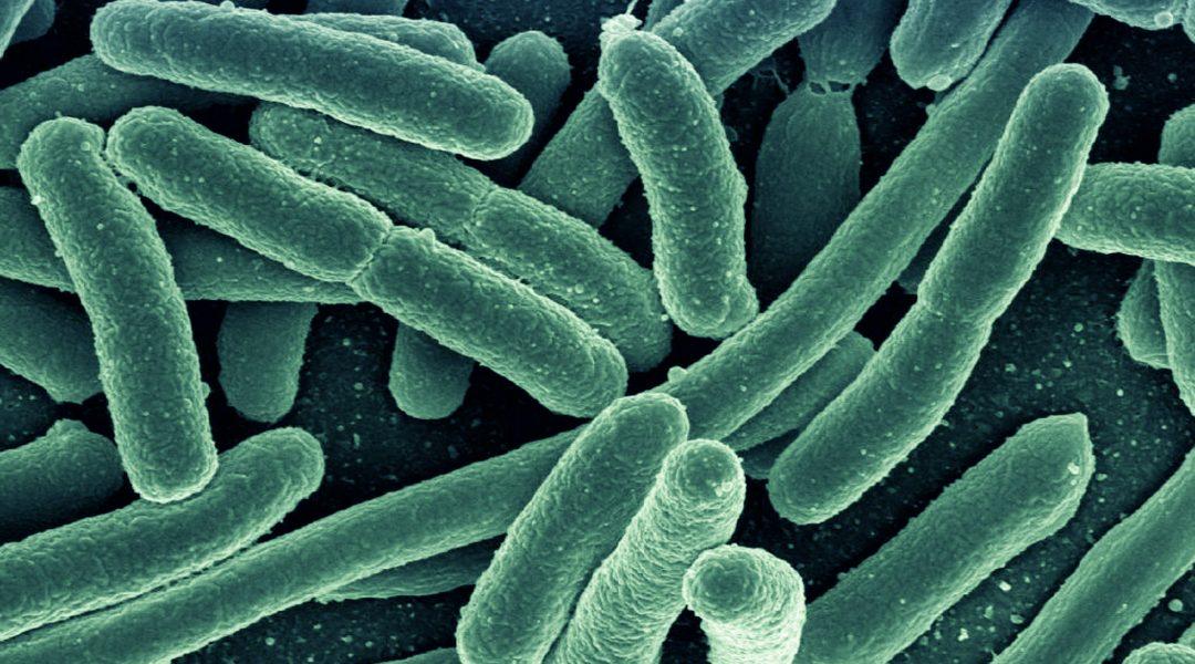 Antibacterial Nanogel-based Textiles