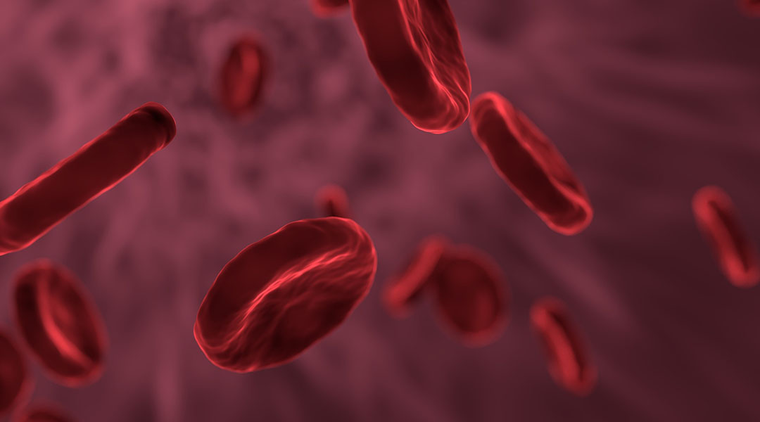Biomorphic Red Blood Cells for Photodynamic Therapy