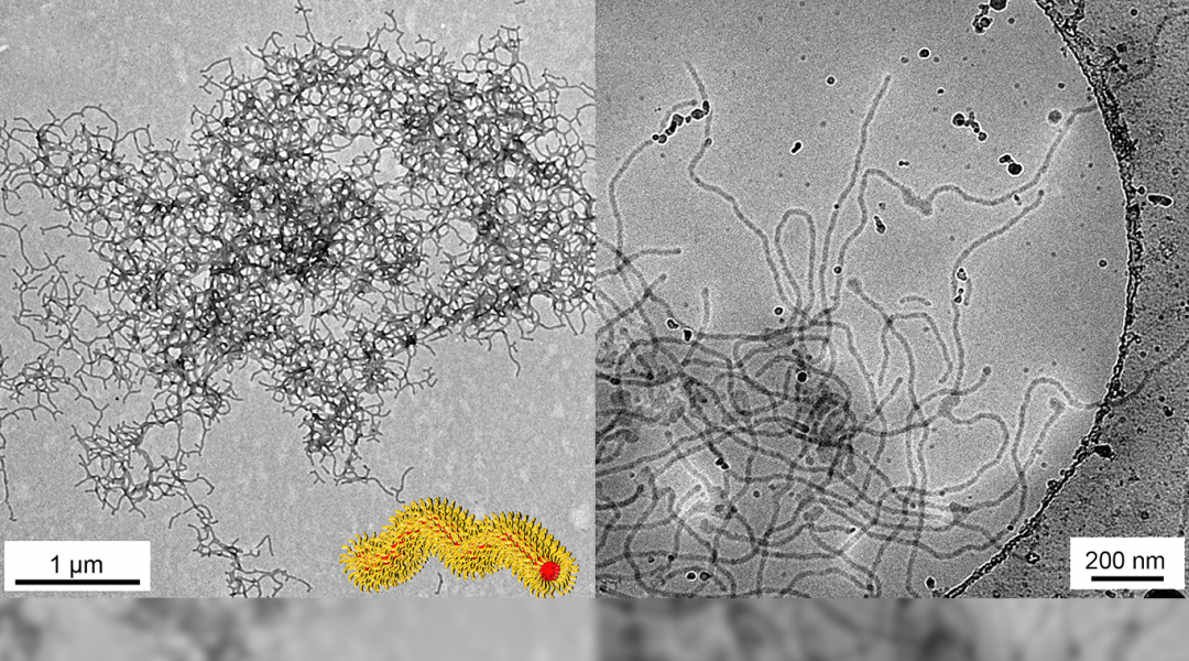 What Do Decorated (Nano)Worms Have to Do with Stem Cells?