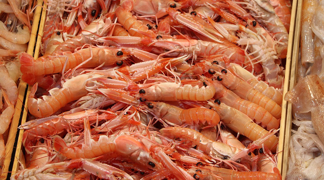 Million Dollar Shrimp: Valorization of Chitin from Northern Moroccan Shrimp