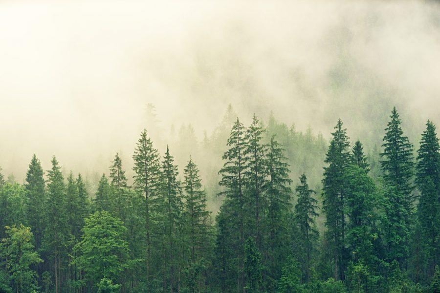 Phytoremediation for Ecosystem Restoration