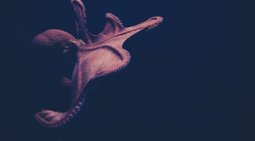 Mimicking the Motions of the Multitalented Octopus