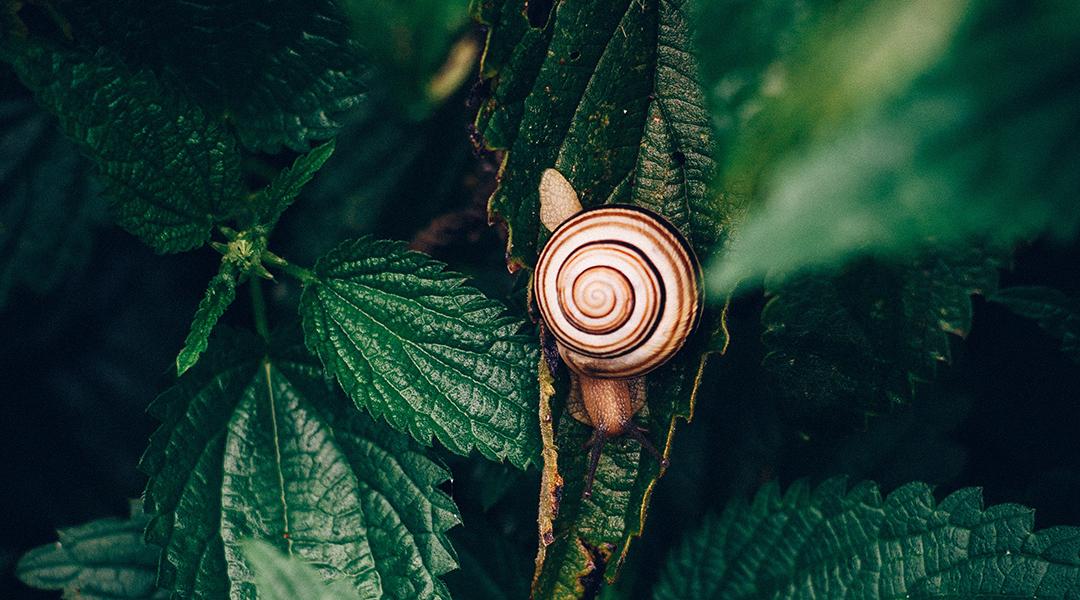 Light-Powered Robotic Snails